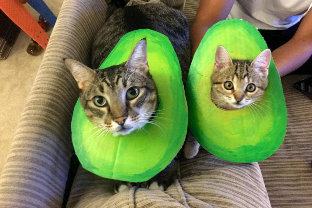 two cats dressed as matching avocados