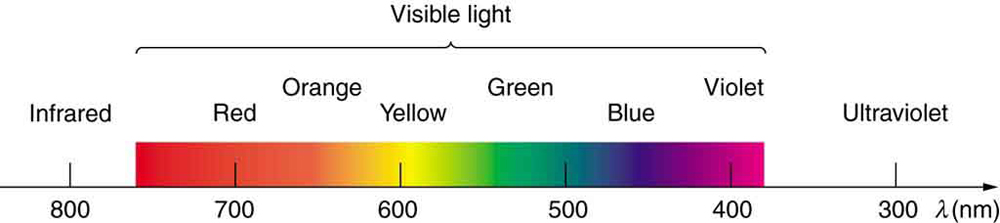 Figure 2.3.4. The visible light spectrum, showing wavelength ranges for colors in nanometers.