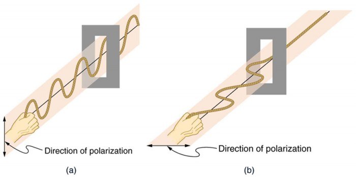 Figure 2.3.13. he transverse oscillations in one rope are in a vertical plane, and those in the other rope are in a horizontal plane. The first is said to be vertically polarized, and the other is said to be horizontally polarized. Vertical slits pass vertically polarized waves and block horizontally polarized waves.