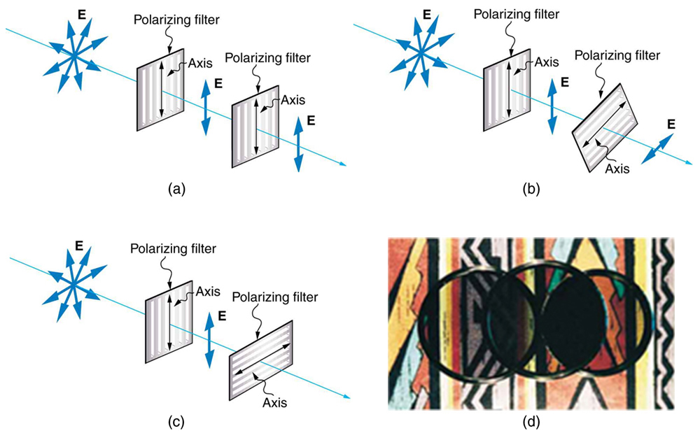 Figure 2.3.17. The effect of rotating two polarizing filters, where the first polarizes the light. (a) All of the polarized light is passed by the second polarizing filter, because its axis is parallel to the first. (b) As the second is rotated, only part of the light is passed. (c) When the second is perpendicular to the first, no light is passed. (d) In this photograph, a polarizing filter is placed above two others. Its axis is perpendicular to the filter on the right (dark area) and parallel to the filter on the left (lighter area). (credit: P.P. Urone)