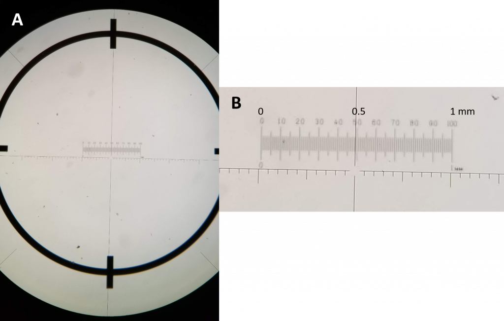 Figure 2.4.18. a) A view through the ocular showing the ocular crosshairs and micrometer (not labeled with numbers) superimposed on a 1 mm scale on a micrometer slide. b) A close-up view of the micrometer slide scale (top) with a total distance of 1 mm marked in hundredths of a mm, and the ocular micrometer scale (bottom).