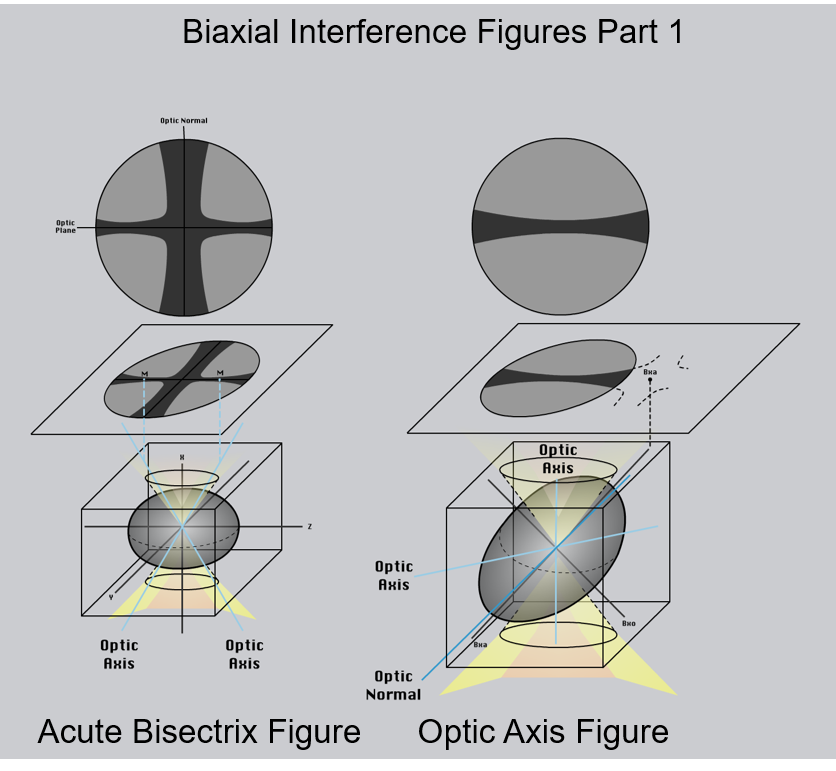 Figure 2.8.12.A. Different types of interference figures produced by biaxial minerals. For simplicity, isochromes are not shown. The lower part of each image shows the orientation of the indicatrix for the mineral. The middle part of the diagram shows the interference figure relative to the thin section and the upper image shows the view through the microscope ocular. M= melatope; Bxa = acute bisectrix; Bxo = obtuse bisectrix.